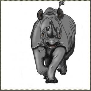 Rhino tale